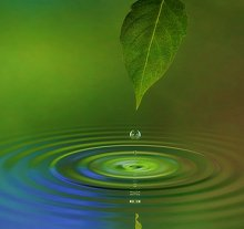 Contact Details and Links. Library Image: Leaf and Water